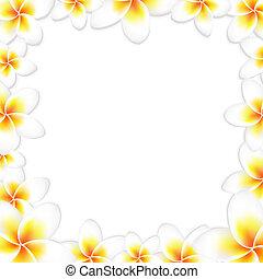 frangipani, blanco, marco