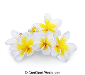 frangipani, bloem, spa