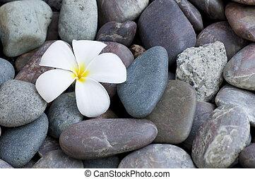 frangipani, blume, stapel, steinen