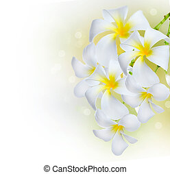 frangipani, border.plumeria, fiori, terme