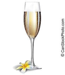 frangipani, champanhe, isolado, flover, vidro