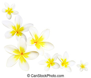 Frangipani Corner - Frangipani or plumeria flowers make a...