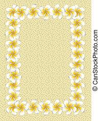 frangipani, cornice, fiori bianchi, sabbia
