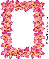 frangipani, cornice