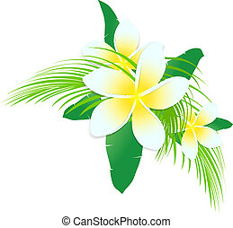 Frangipani Tropic Flowers With Palm Leaves Over White...