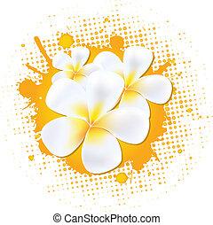 frangipani, fiore, fondo
