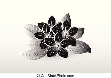 frangipani, fiore, o, plumeria