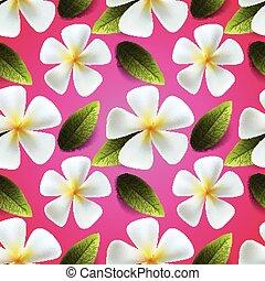 frangipani, fiori, seamless, modello