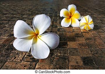 frangipani, fiori, su, fijian, compagno