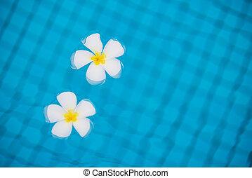 frangipani, fiori tropicali, su, il, acqua, in, il, stagno