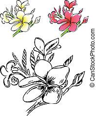 frangipani., flovers