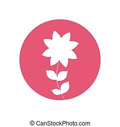 frangipani flower natural icon