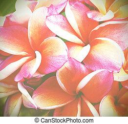 Frangipani flower old vintage retro style