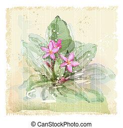 Frangipani flower (plumeria). Watercolor style.