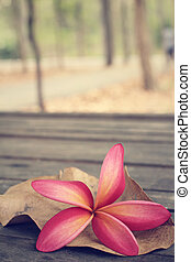 Frangipani flower with forest
