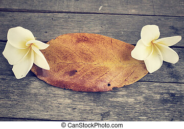 Frangipani flower with leaf