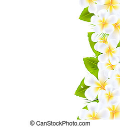 Frangipani Flowers Border, Vector Illustration