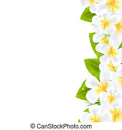 Frangipani Flowers Border