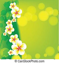 Frangipani flowers on green background