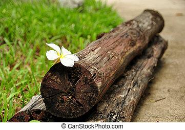 frangipani flowers on wood