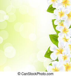 Frangipani Flowers With Leaf, Vector Illustration