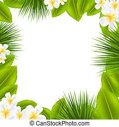 frangipani, frame, blad