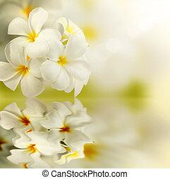 frangipani, kurbad, blomster, reflekter, water.plumeria