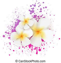 frangipani, kwiaty, grunge