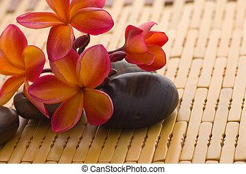 frangipani, ligado, pedras