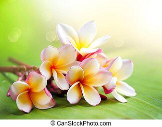 frangipani, obrazný, lázně, flower., plumeria
