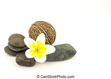 Frangipani on stones, (Plumeria) isolated on white background.