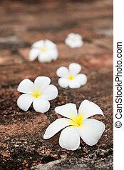 Frangipani (plumeria) flowers on stones