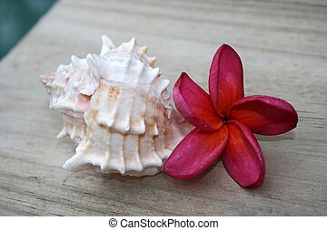 Frangipani & Shell - A pink frangipani and a light pink...