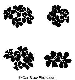 frangipani, silhouette