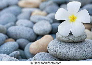 frangipani, stapel, steinen