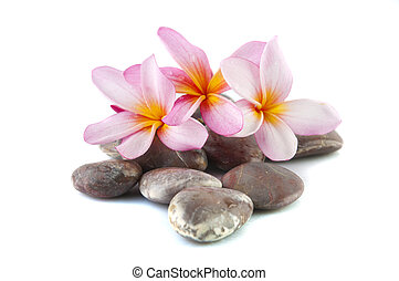 frangipani flower isolated on stack of rocks