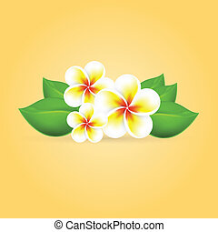 Frangipani tropical flower. EPS10 vector.