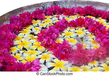 frangipani, tropikalny, zdrój, kwiat