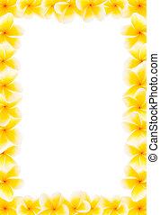 frangipani, volle, grens, gele