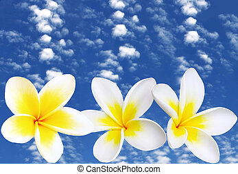 Frangipani with Blue Sky