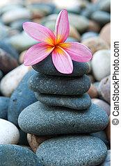 frangipani, zweck, steinen, kieselsteine, spa
