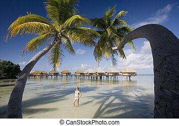 franzoesisch, -, südpazifik, polynesien