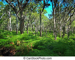 Fraser island forest and ferns