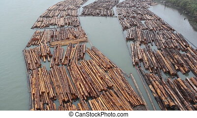 Fraser River Lumber. - Bundles of lumber in the Fraser River...