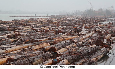 Fraser River Lumber. Wide shot.