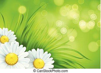 frash, קפוץ, דשא ירוק, ו, קמומיל, רקע., וקטור, דוגמה