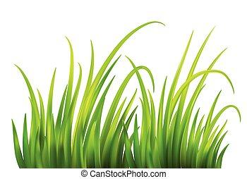 frash, קפוץ, דשא ירוק, רקע., וקטור, דוגמה