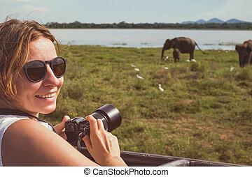 frau, auf, asiatisch, tierwelt, safari., dame, nehmen aufnahme, von, herde elefanten, mit, sie, kamera.
