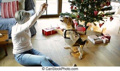 frau, baum, hund, front, älter, weihnachten