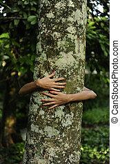 frau, liebe, tree, umarmt, wald, nature: